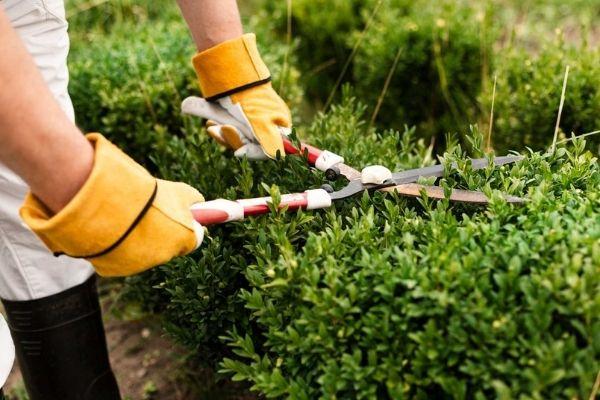 Service Garden Maintenance Hedging