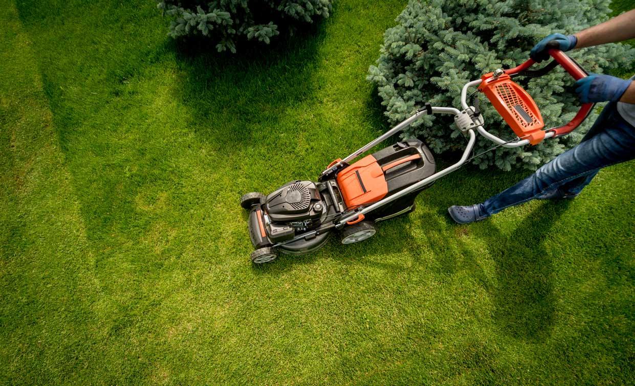 gardener mowing lawns in back yard