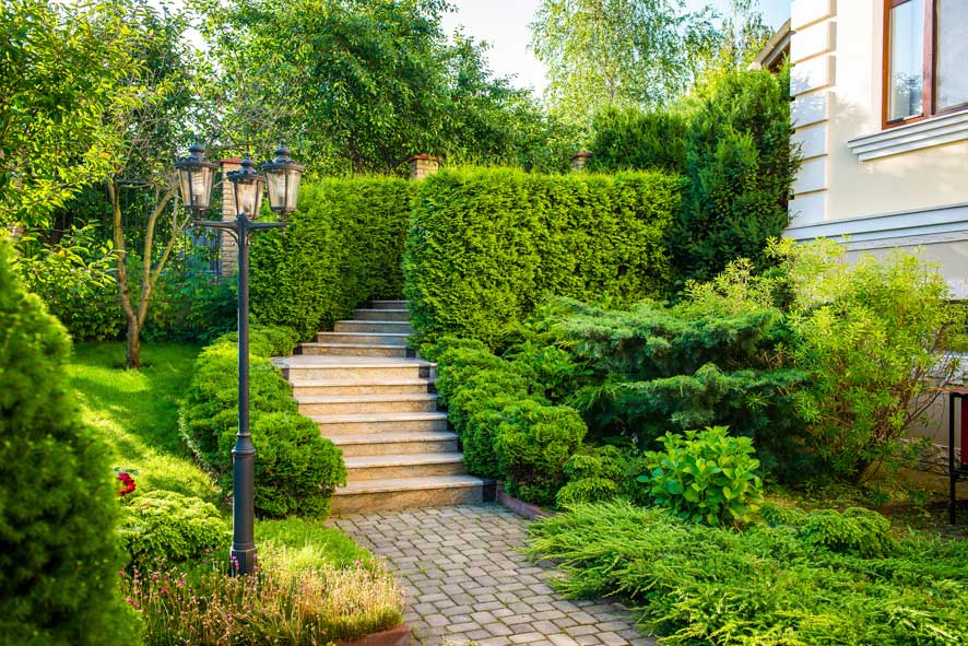 stone path bushes and plants